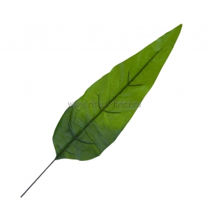 Лист фикуса узкий (20шт)