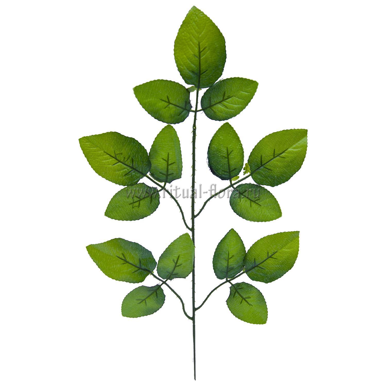 Лист яблони (200шт)