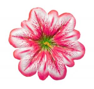 Клематис атлас d-11 cм розовый(100 шт)
